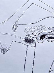 Drawings, Cartoons, Drawing, Draw