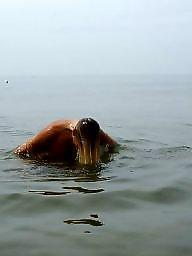 Beach, Boys, Nude beach, Milf boy, Dutch, Beach amateur