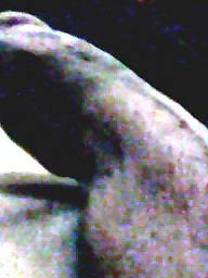 Webcam, Dick, Dicks