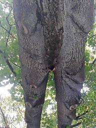Erotic, Nature, Natures