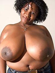 Tits, Big tit, Body